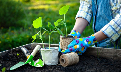 4 tips every amateur gardener should know